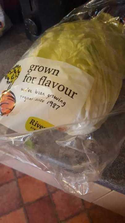 Riverford full lettuce