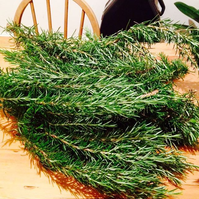 Heaps of fresh Rosemary from Roseberry Gardens!