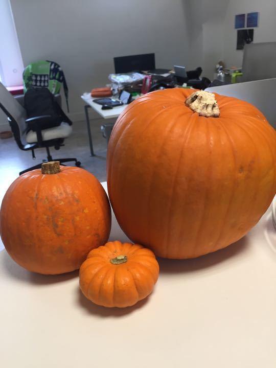Display Pumpkins