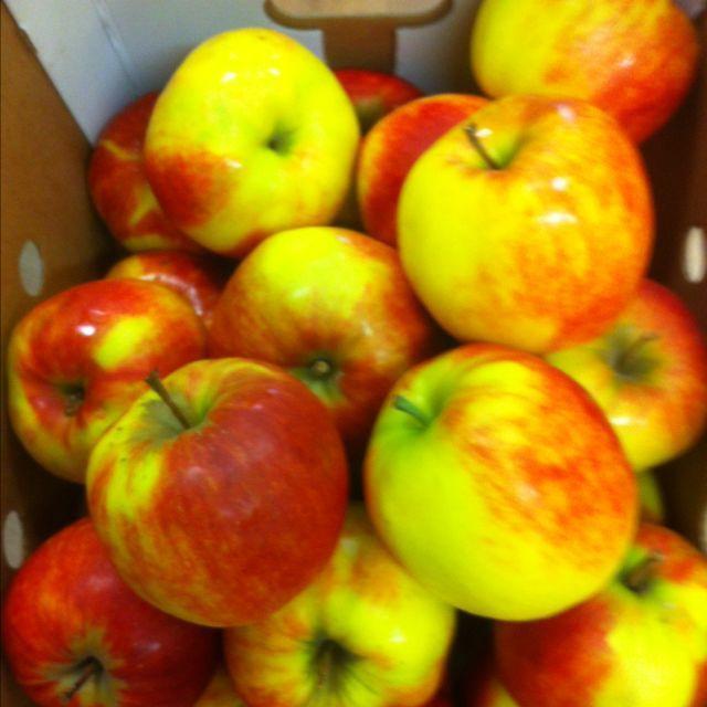 apples (jonagold)