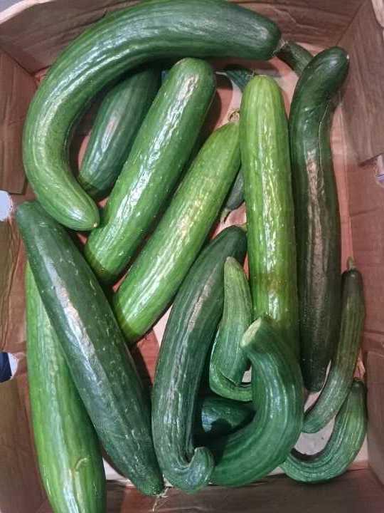 Wonky cucumbers