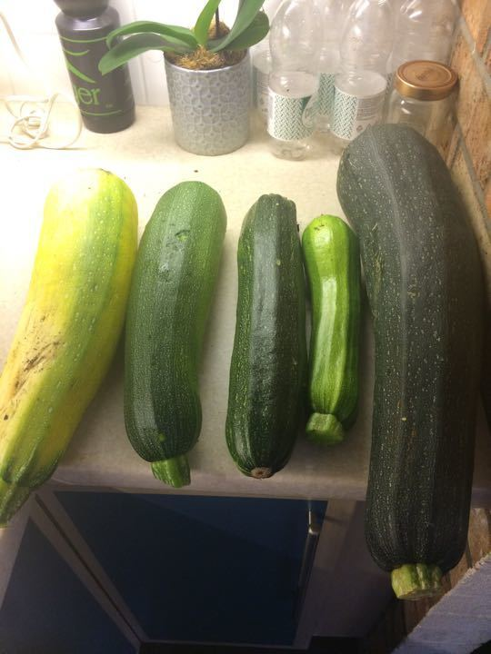 Free large courgettes