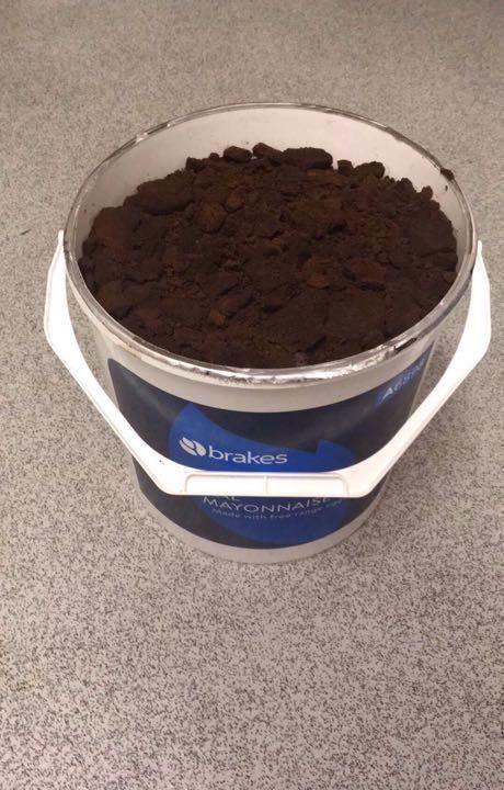 Coffee grounds for soil from Curiosity coffee shop