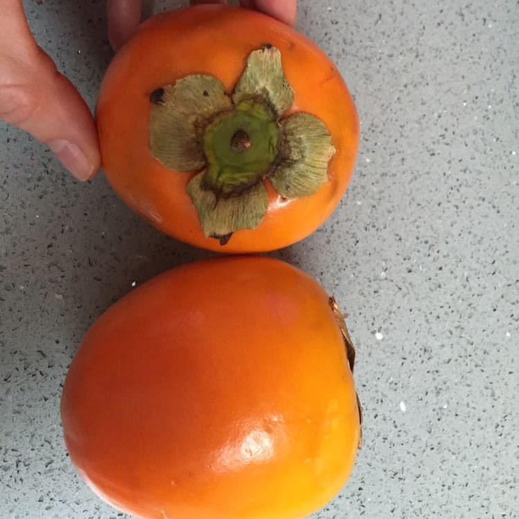 Two Persimmons/Sharon Fruit