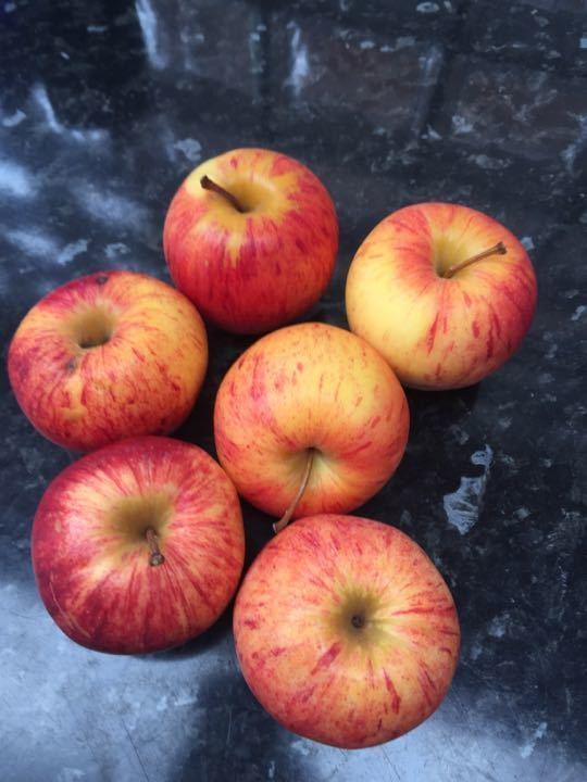 6 gala apples
