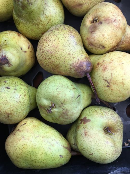 X3 sets of 5 pears