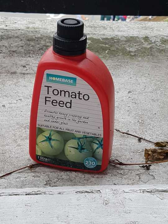 Homebase tomato feed
