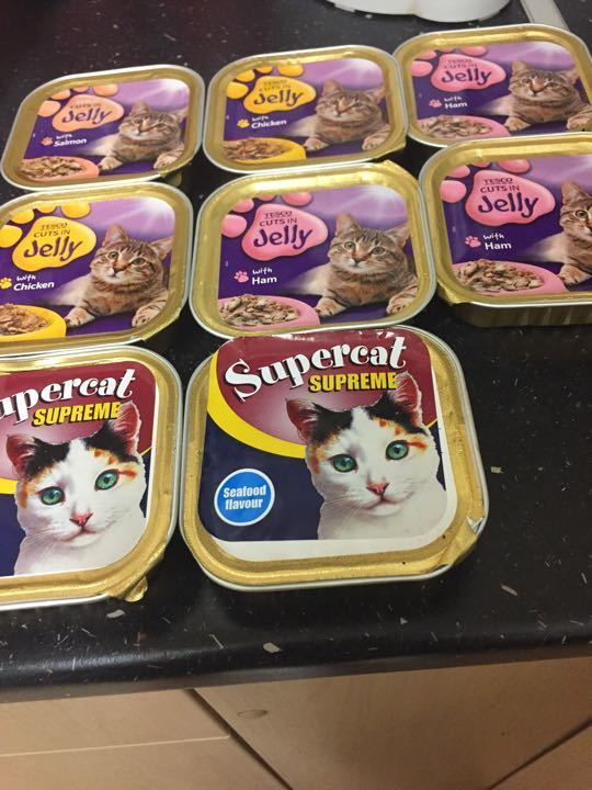 Cat Food in jelly